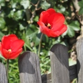 szwajcarskie ogródki